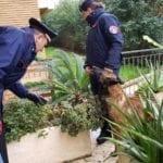 Unità cinofile in azione a scuola e non solo, denunciata una donna