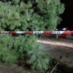 Formia, cade un albero in Largo Remigio Paone #FOTO