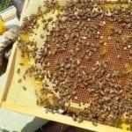 Agricoltura, Regione Lazio: 136mila euro per l'Ocm miele