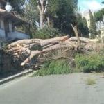Danni del maltempo a Scauri: alberi abbattuti dal forte vento