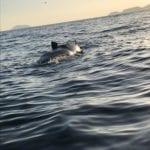 A Cala Feola la carcassa di una balena, indagini in corso