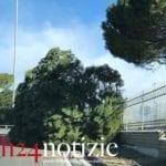 Maltempo, alberi in strada a Minturno – FOTOGALLERY