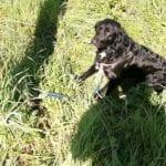 Abbandona il cane legandolo a un palo, identificato e denunciato