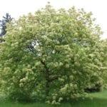 """Itri, grande partecipazione all'iniziativa """"Un albero per ogni nato"""""""