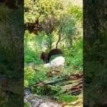 Al Giardino di Ninfa si fanno vedere gli scoiattoli #VIDEO