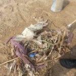 Inquinamento da allevamenti di miticoltura: Legambiente Terracina presenta un esposto (#FOTO)