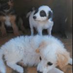 Cuccioli abbandonati, l'appello che parte dai social