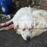 Bomba d'acqua a Formia, il salvataggio del cane a Trivio #VIDEO
