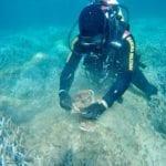 Residuati bellici scoperti nel mare di Palmarola: l'intervento dei palombari
