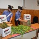 Una serra di marijuana: sequestrati oltre 20 chili di piante e infiorescenze, 42enne in manette