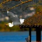 Il volo degli uccelli al lago di Fondi #FOTO