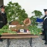 Piantagione di marijuana nel giardino di casa: condannato