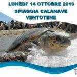 Salvata e curata, è tornata libera in mare la tartaruga 'Aprea' (#VIDEO)