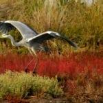 Giornata mondiale della biodiversità e l'importanza del Parco del Circeo