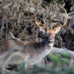 Le suggestioni della natura: le foto dal Parco del Circeo