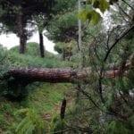 Maltempo a Formia: alberi abbattuti nel quartiere di Mola (#FOTO)