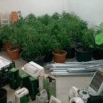Sezze, operazione dei carabinieri: sequestrata una piantagione di marijuana
