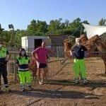 Gli animali del circo Orfei e il Covid: il sostegno dei volontari della protezione civile