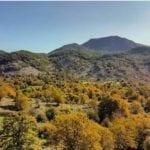 Nuovo regolamento per il taglio alberi nel Parco Aurunci