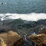 """VIDEO – Scie """"sospette"""" nel mare di Scauri: le ultime segnalazioni"""