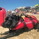 Cani bagnino sulle spiagge di Sperlonga. Partito il nuovo progetto