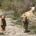 Itri, cani randagi senza controllo in zona Madonnella: il caso