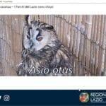 Dal Parco Riviera d'Ulisse il video sugli animali che tornano liberi