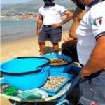 Venditore abusivo di prodotti ittici in spiaggia sanzionato con multa e foglio di via