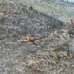 Vasto incendio in montagna, operazioni in corso da questa mattina