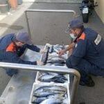 Tonno rosso pescato illegalmente, 5mila euro di multa per pescatore sportivo