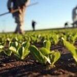 Agricoltura biologica, la Regione predispone il pagamento di tutte le domande di sostegno