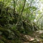 Regione Lazio: inizia da Maenza la messa in sicurezza delle foreste demaniali