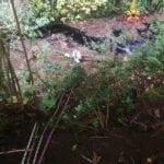 Cane precipita in un canalone: salvato dai Vigili del Fuoco