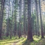 'A scuola dall'albero': nuove aree verdi a Formia per  il progetto 'Ossigeno'