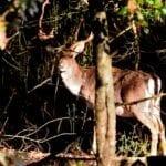 Sabaudia, la magia che si annida nel bosco – FOTO