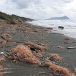 Erosione, il Comune presenta un piano da 39 milioni di euro