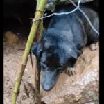 Cucciolo prigioniero nel bosco salvato dai volontari dell'ass.ne VITA (#VIDEO)