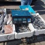 Multa e sequestro della merce per un venditore abusivo di prodotti ittici
