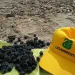 Inquinamento da dischetti di plastica: Legambiente chiede l'intervento delle autorità
